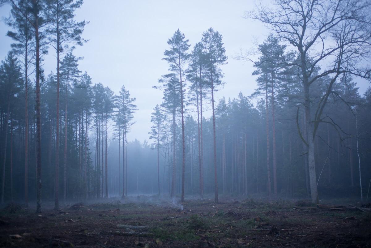 foresta di bialowieza foto di Maurizio beucci