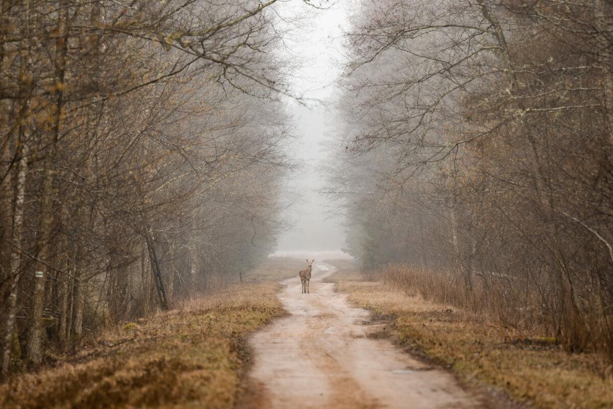 capriolo per Leica Natura foro di Maurizio beucci per leica foresta