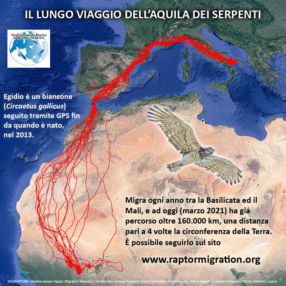 Il percorso del biancone Egidio registrato in 8 anni di monitoraggio continuo Leica Natura blog