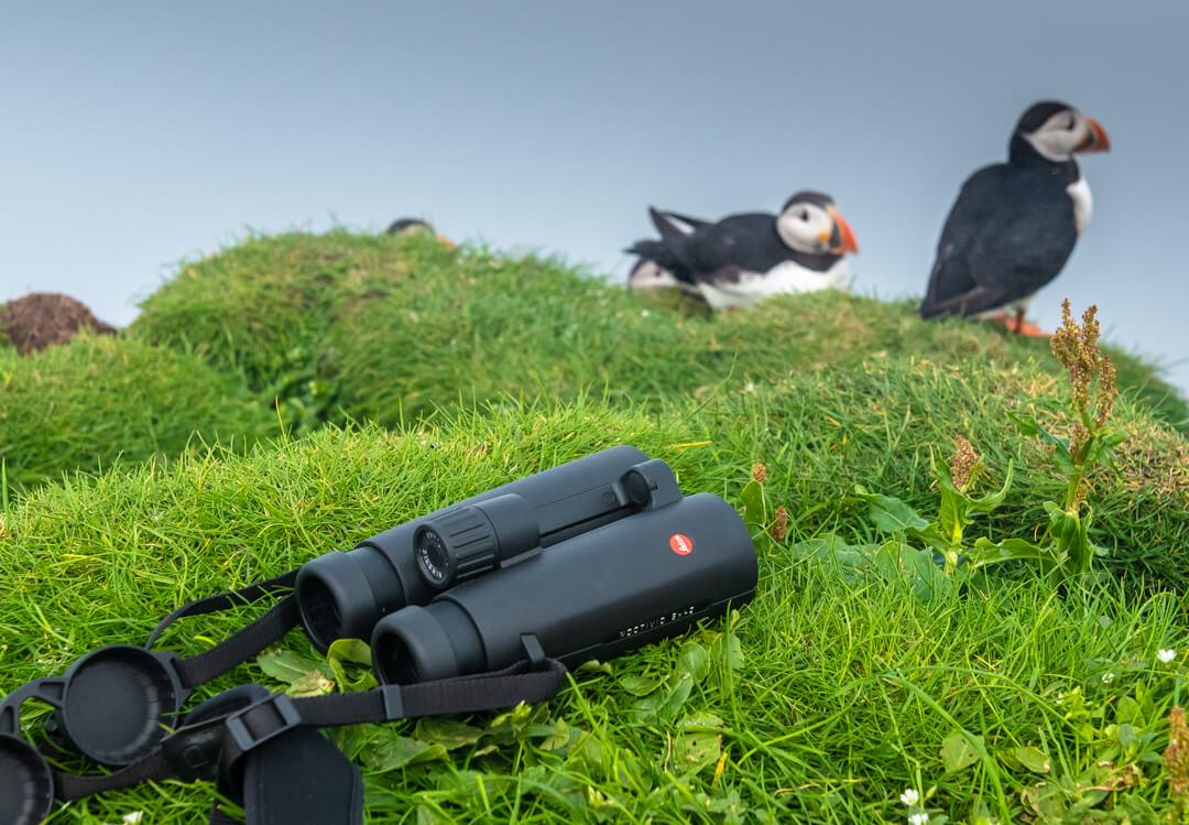 Binocolo Leica Noctivid 8x42, pulcinelle di mare -Isole Faroe 2021 Tatiana Chiavegato leica_natura