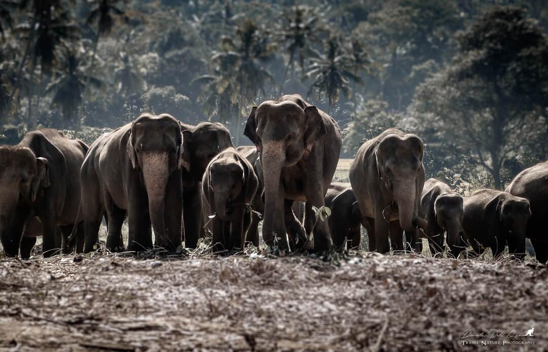 Elefanti- Sri Lanka 2015 | Fotocamera Leica V-Lux 3 Leica Natura Tatiana Chiavegato binocolo leica